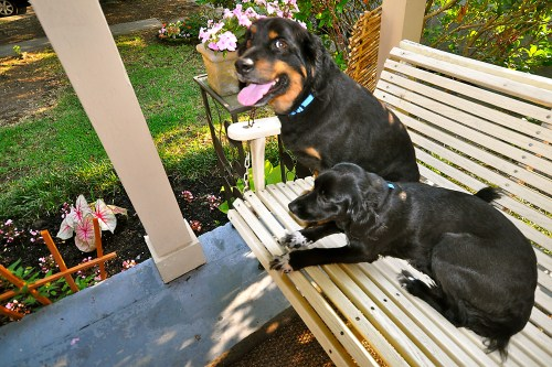 Dogs lounging on the porch