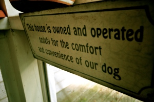 Doggy Door sign on porch