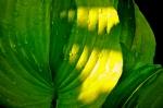 Tropical leaf in Charleston SC