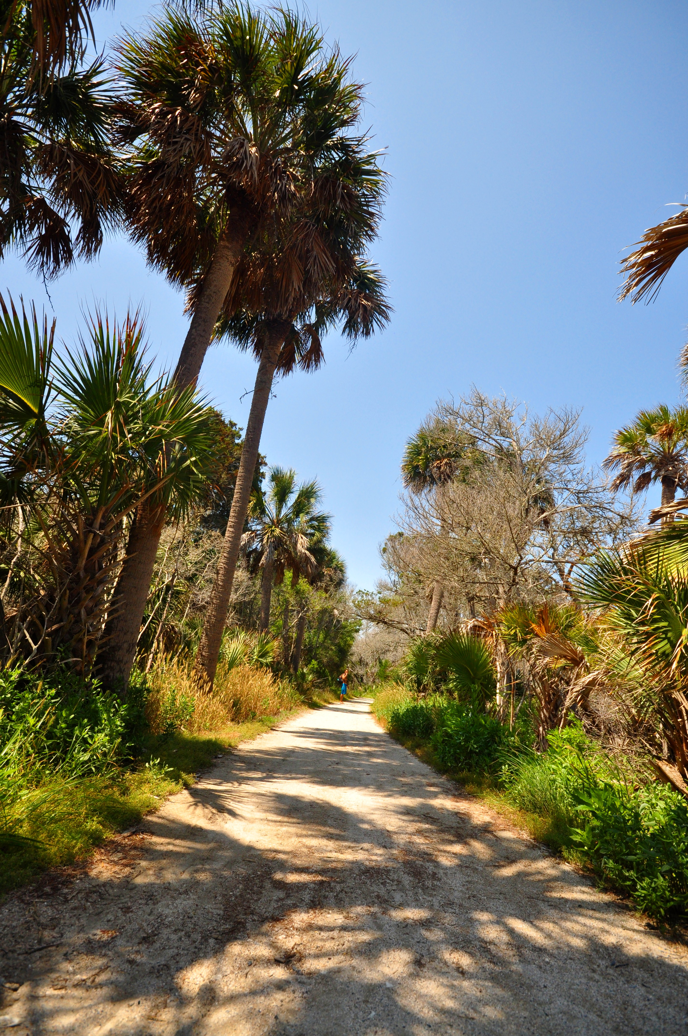 South Carolina beach path ...