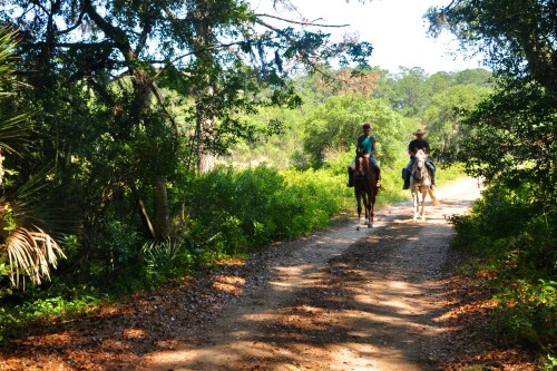 Horses on Edisto Island SC