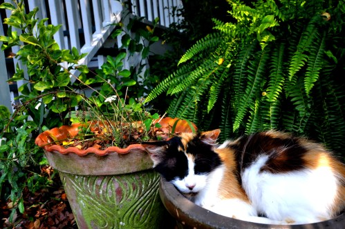 Sleeping cat in a flower pot