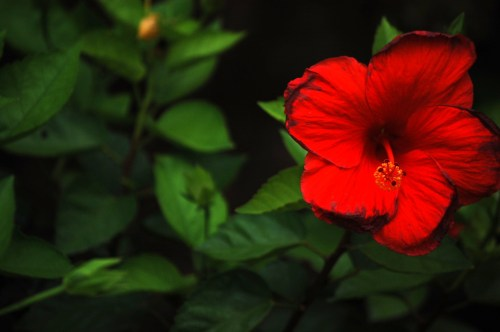 Bright red flower