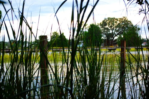 Marsh grass at high tide