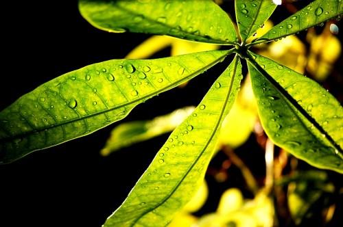 plant soaking rain and sun