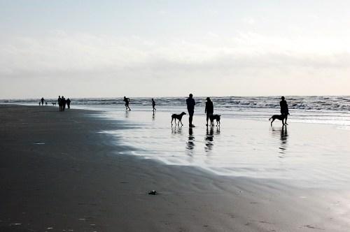 Beach Dog Park