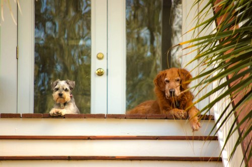 Dogs on a porch