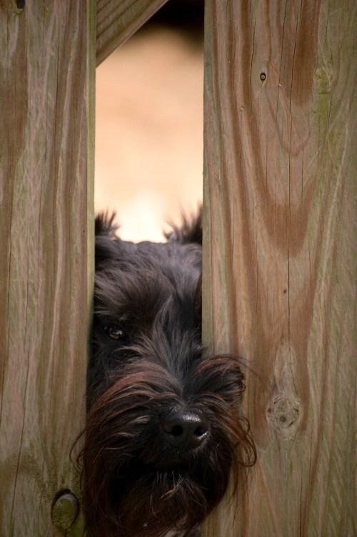Let me out, please